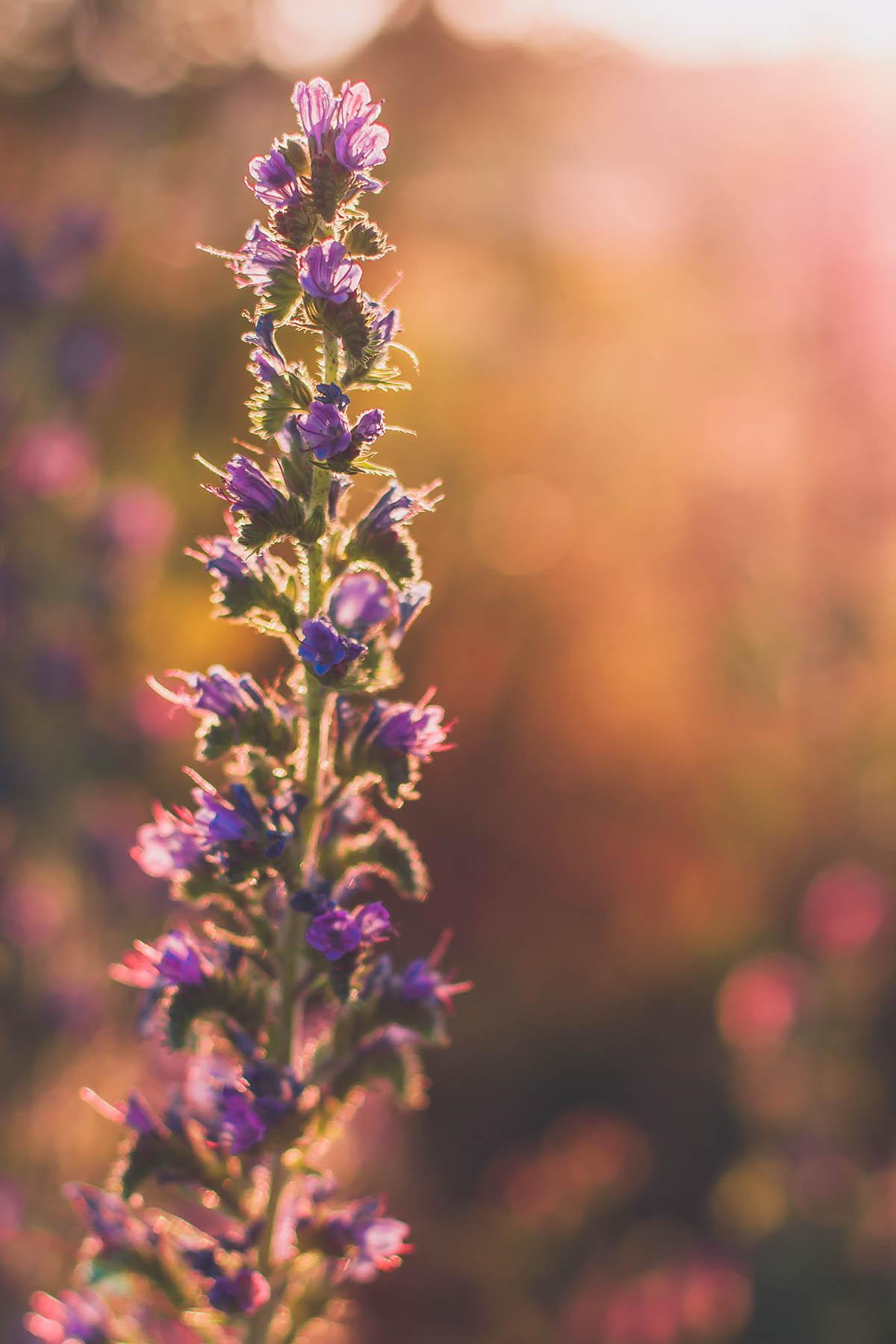 Sliacka photo violet-blur