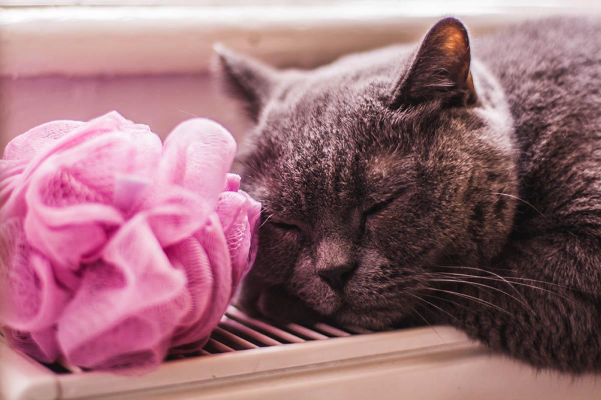 Sliacka photo sleeping-remus