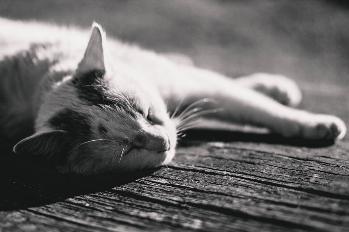 Sliacka photo lazy cat