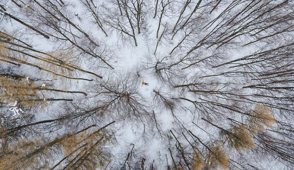 Soňa čermáková - Na ceste domov, vo výškach stromov...