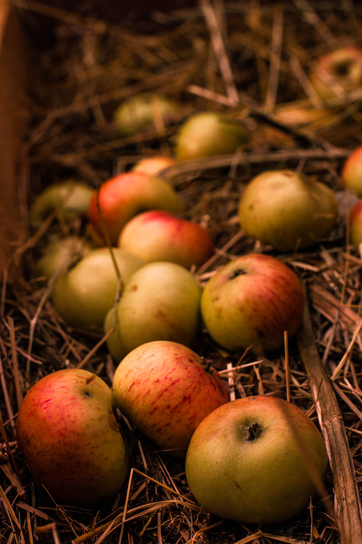 Mirka Sliacka – Jabĺčka v sene