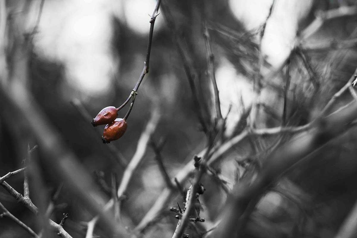 Mirka Sliacka – Pozostatok zimy